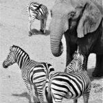 wildlife-img3
